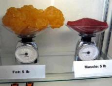 5lb-of-fat-and-5lb-of-muscle